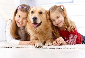Pet Stain Removal | Garden Grove, CA
