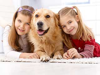 Pet Stain Removal | Garden Grove Carpet Cleaning