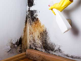 Right Mold Removal Company | Garden Grove Carpet Cleaning Company